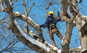 Winter tree care